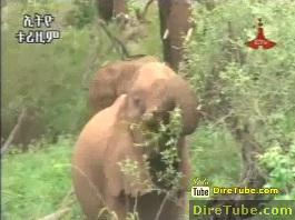 Tourism Activities on Ethiopian Elephants