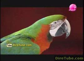 The Dancing Parrot