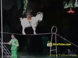 Amazing and Funny Video Collection - Jan 8, 2011