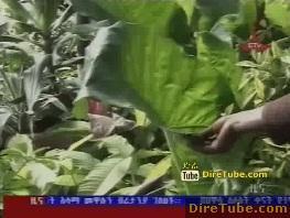 Ethiopian News - ETV 8PM Full Amharic News - Sep23,2011