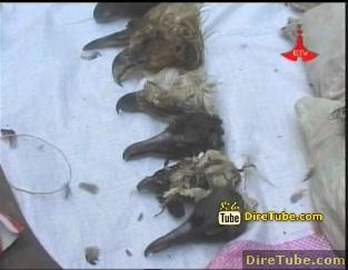Two Foreign Nationals arrested for killing unique Ethiopian wild Birds