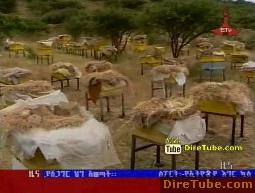 ETV 1PM Full Amharic News - Nov 15, 2011