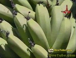 Ethio-Tourism - Benishangulgumz's Natural Resource