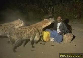 Hyena Show in Harar City, Ethiopia