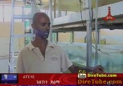 ETV 1PM Full Amharic News - Nov 21, 2011