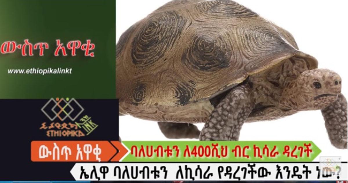 1 ኤሊ ለመግዛት 4 መቶ ሺህ ብር የከሰረው ኢትዮጵያዊ ባለሃብት አስገራሚ ታሪክ!!! EthiopikaLink